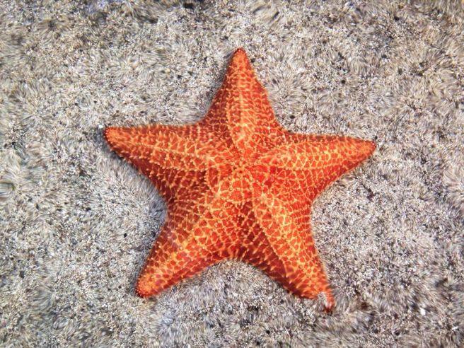 close-up-of-orange-starfish-on-sand-489010151-59847f7f22fa3a0010518acc