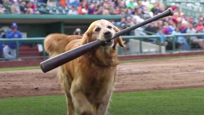 jake-the-diamond-dog